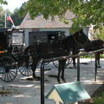 Shady Parking for Horse-Drawn Carriages
