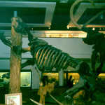 A Giant Ground Sloth