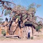 A Large Dead Tree in Cerrillos