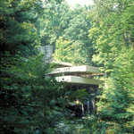 Fallingwater Amidst A Forest