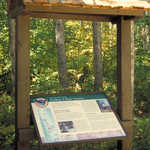 Interpretive Sign at a National Forest Wayside