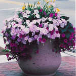 Planter with Flowers in Ferndale