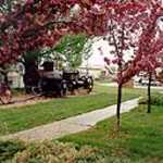 Crabapple Trees in Bloom at Fairview Museum