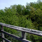 View from the Observation Tower in Magee Marsh