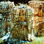 Petrified Tree Stumps