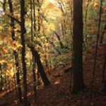 Fall Illuminates Great Bluffs State Park