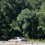 Overhanging Trees on the Merritt Parkway