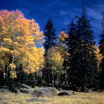 Fall Foliage Along the Continental Divide