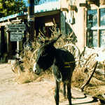 The Locals are Friendly in Cerrillos