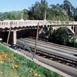 Flowers on Arroyo Seco Historic Parkway