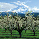 Upper Hood River Valley Orchards