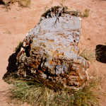 Petrified Wood at Escalante State Park