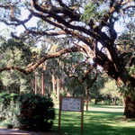 A Walk Through the Hammock at Washington Oaks Gardens State Park