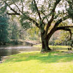 A Pond at Middleton Place