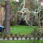 Couple in the Gardens of Magnolia Plantation