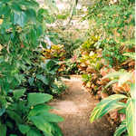 The Barbados Tropical Gardens at Magnolia Plantation