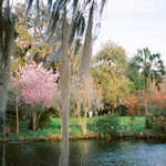 Spring at Magnolia Plantation