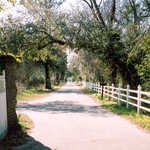 The Entrance to the Plantation