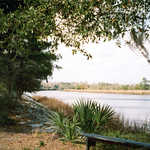 The Ashley River at Drayton Hall