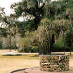 A Well on the Drayton Hall Grounds