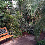 Bench in the Barbados Garden