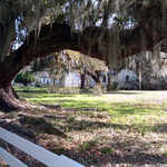 "Slave Quarters on ""The Street"" at Magnolia Plantation"