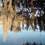 Spanish Moss over the Ashley River