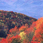 Striking Fall Colors on the Cherohala Skyway