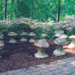 Enchanted Woods' Fairy Ring at Winterthur