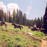 Horseback riders on the White Pine Trail