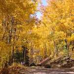 Surrounded in Gold on the Grand Mesa Scenic and Historic Byway