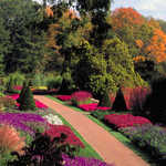 Autumn Walk in the Longwood Gardens