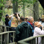 Birdwatching at Magee Marsh Wildlife Area