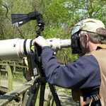 A Birder at Ottawa National Wildlife Refuge