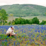Visitor Enjoying Field of Larkspur on The Energy Loop: Huntington/Eccles Canyons Scenic Byway