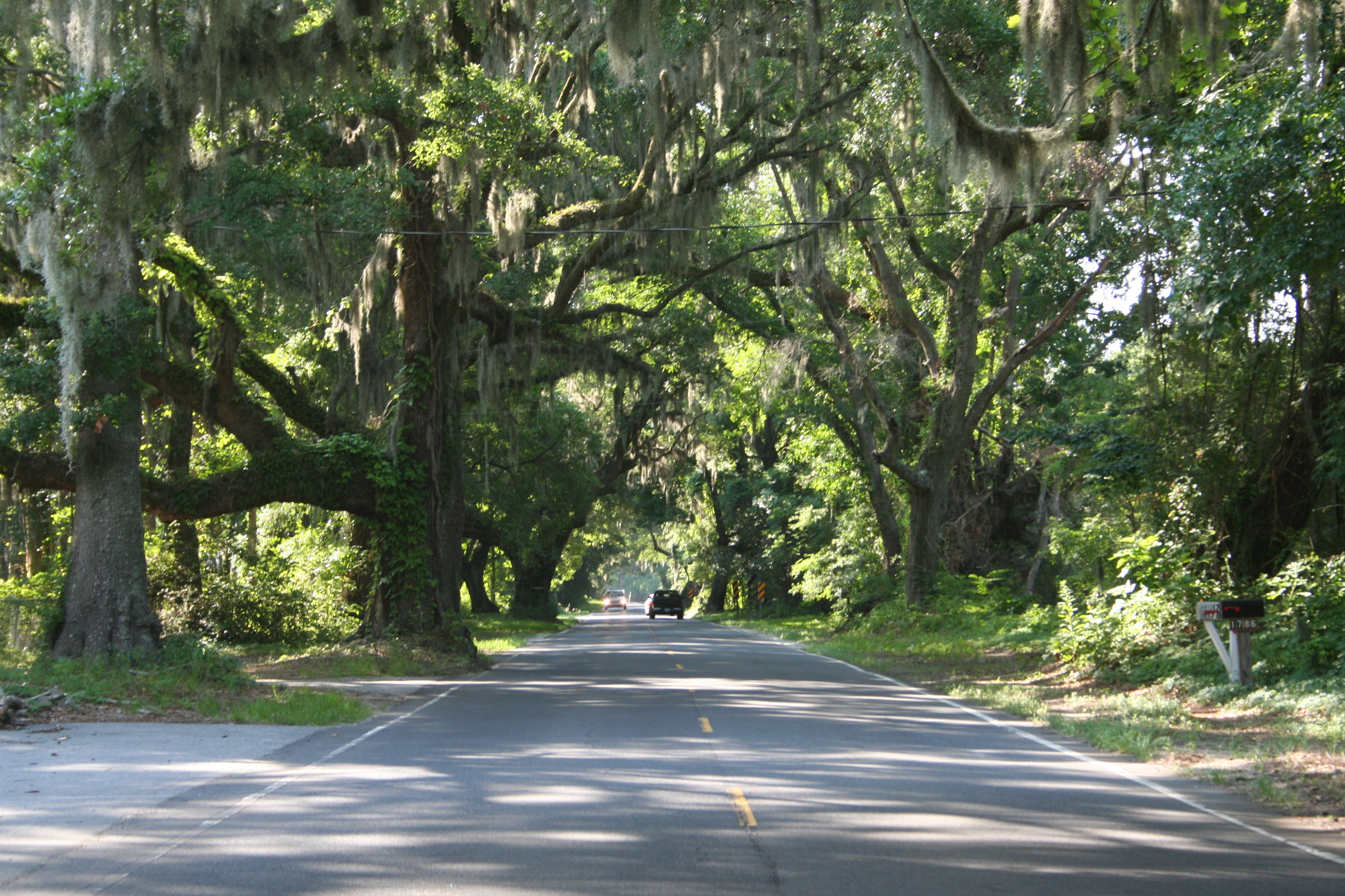 Photo #77369: The Live Oak Canopy on Edisto Island | America's Byways