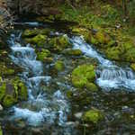Mossy Rocks of Spring Creek in Logan Canyon