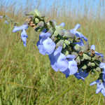 Wildflowers at Tallgrass Prairie National Preserve