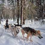 Dogsledding in the Gunflint Trail Area