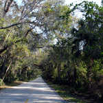 Tree Canopy over the Ormond Scenic Loop & Trail