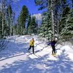 Cross-country Skiing on a Gunflint Ski Trail