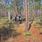 Hikers on the Florida Scenic Trail