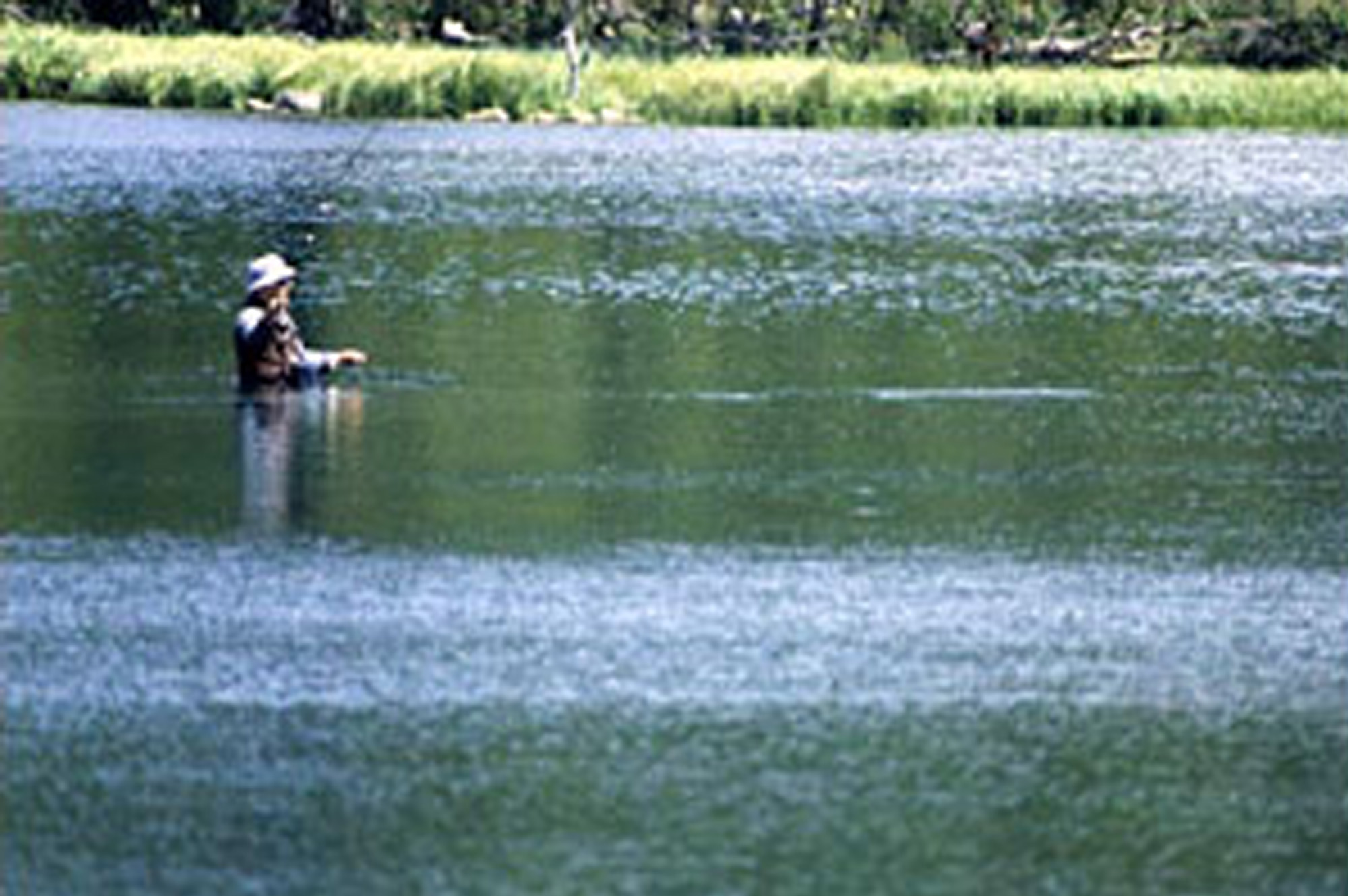 Photo 79290 fly fishing at panguitch lake america 39 s byways for Panguitch lake fishing report