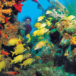 Diving by Florida's Coral Barrier Reef