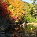 The Au Sable River Adorned in Fall Foliage