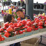 Kids Exploring a Red Sweet Pepper Stand