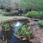 Japanese Garden at Bellingrath