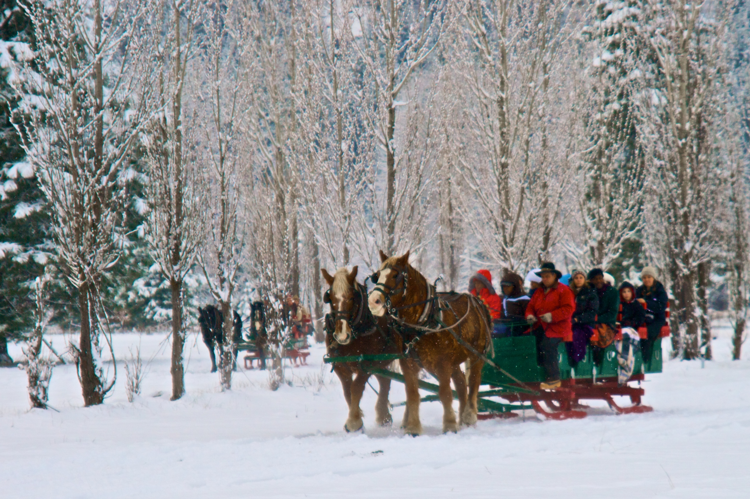 Photo 81875 Wintery Sleigh Ride Americas Byways
