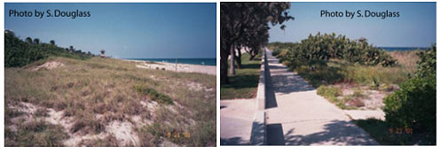 Figure 7.16. Beach nourishment project with constructed dune on top of old, failed revetment protecting road (Florida Highway A1A, Delray Beach, 2001)