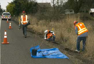 Photo of crew in orange vests along side of highway digging up dogbane for relocation.